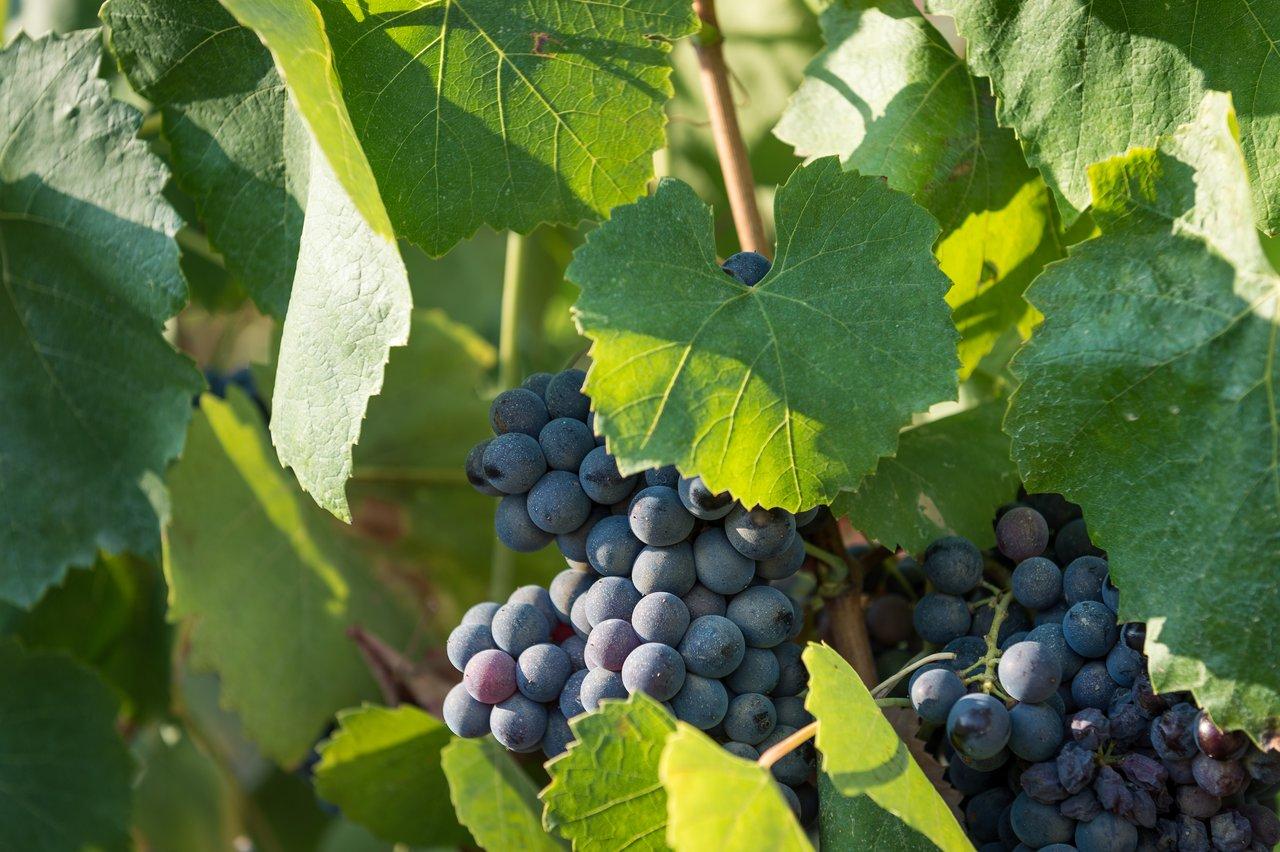 Wine tasting fattoria di fubbiano