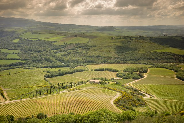 Rolling hills with vineyards